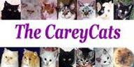 CareyCats1